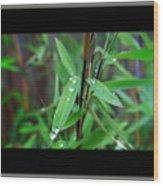 Rain On Bamboo Wood Print