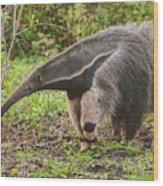 Tamanduá Bandeira - Giant Anteater Wood Print