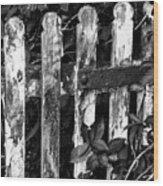 Weathered Gate Wood Print
