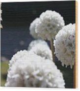 White Aliums Wood Print