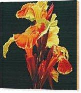 Yellow Cannas Wood Print