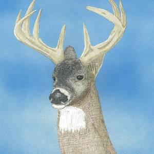 Eight Point Buck Drawing by Calvert Koerber