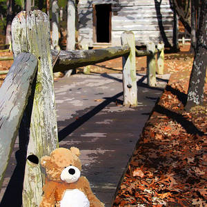 dff2d436d2d Bear At The Cabin by Angel McCoy. Teddy Bear Wearing Pink Tutu ...