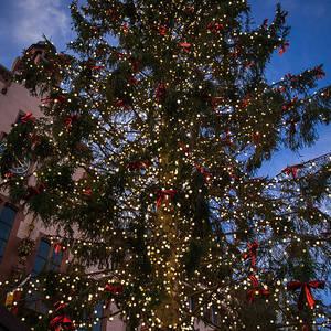 Christmas Tree Bill.Frankfurt Christmas Tree Photograph By Bill Howard