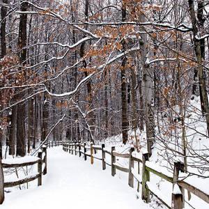 New York Botanical Garden Snow Photograph By Michael Fusco