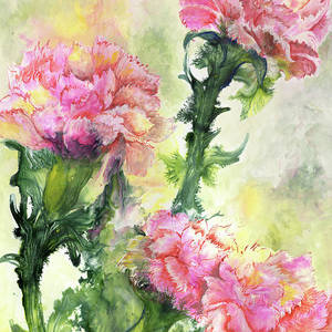 TULIP QUARTET 8X10 FLOWER print by Artist Sherry Shipley
