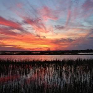 Sunset Flower Photograph By Cynthia Guinn