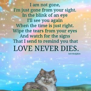 Sleeping Cat Love Never Dies Digital Art by Kate McGahan