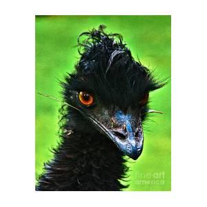 b55ce6edfe Australian Emu Photograph by Blair Stuart