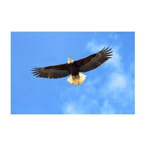 Flying eagle photograph by peggy collins flying eagle by peggy collins altavistaventures Gallery