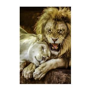 Lion Attitudes  by Brian R Tolbert