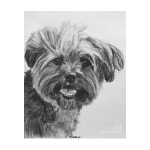 Long Haired Yorkshire Terrier