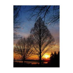 Sunrise At Tydings Park Marina Havre De Grace Md by Jeannie Allerton