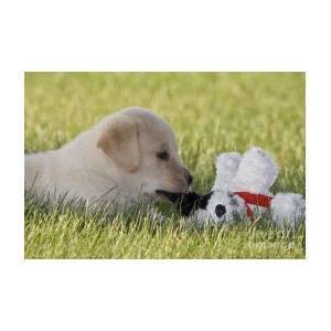 Yellow Lab Puppy With Stuffed Animal Photograph By Linda Freshwaters