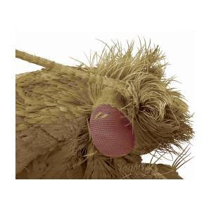 Clothes Moth, Sem by Steve Gschmeissner