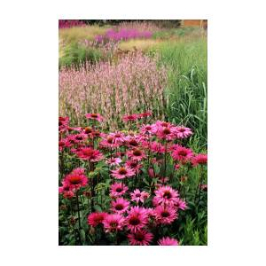 Prairie Style Planting, Garden Design, Herbaceous ...