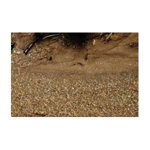 84b9acba4ef1e9 Sparkling Fools Gold Pyrite by LeeAnn McLaneGoetz McLaneGoetzStudioLLCcom