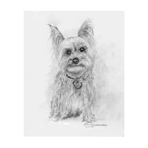 Yorkie Coloring Pages | AKC Yorkshire Terrier-standing | Yorkshire ... | 300x300