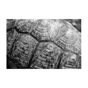 Abstract Black And White Turtle Shell