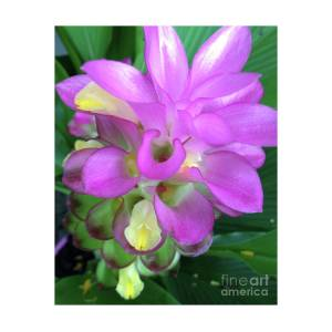 Bright pink ginger flower photograph by karen moren bright pink ginger flower by karen moren mightylinksfo