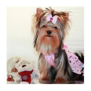Cute Yorkie Puppy In Pink Dress Photograph By Yana Reint