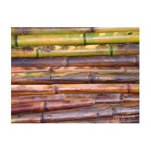 Freshly Cut Bamboo Poles by Yali Shi