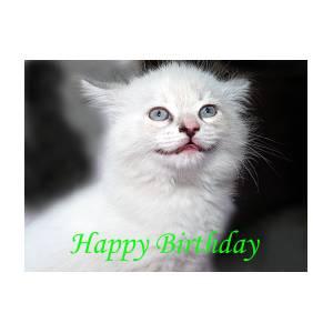 Happy Birthday Kitty By Bob Johnson