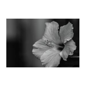 Hibiscus Flower Black And White Photograph By Martin Alonso