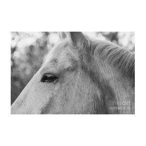 lara with horse 3