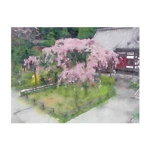 Japanese Weeping Cherry Tree Digital Art By Susan Maxwell Schmidt
