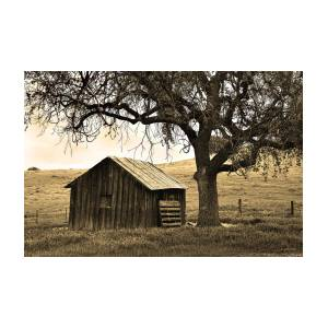 Old Barn And Oak Photograph By Kathy Yates
