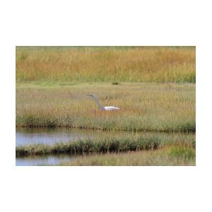 Great Egret On Prowl >> On The Prowl Great Egret Photograph By Linda Crockett