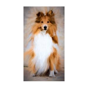 Shetland Sheepdog - Sheltie by Ericamaxine Price