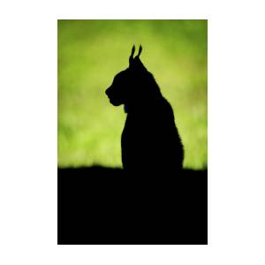 silhouette of lynx on grass in profile photograph by ndp