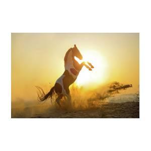 surya namaskar sun salutation photographekaterina druz