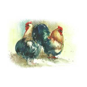watercolor rooster illustration hand draw painting by mary pashkova