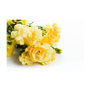 Yellow Soft Spring Flowers Bouquet On White Background Photograph By