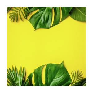 Tropical Leaves And Flowers On Yellow Background Photograph By Natalia Klenova Download 4,229 tropical leaves free vectors. tropical leaves and flowers on yellow background by natalia klenova