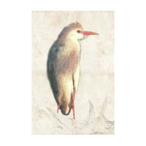 Cattle Egret Photographic Drawing