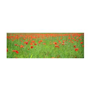 Field Of Poppies Panoramic View By Martial Colomb