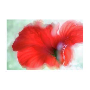 Red Hibiscus Flower Dream