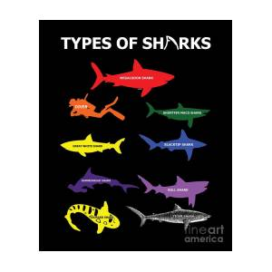 Type Of Sharks Aquamarine Marine Life Water Sea Ocean Shark Family Sea  Creatures Gift by Thomas Larch