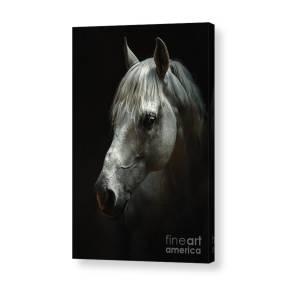 8764e646895 Black And White Horse Head Acrylic Print by Dimitar Hristov