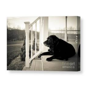2db374e0bbe5 Old Dog On A Front Porch Canvas Print / Canvas Art by Diane Diederich