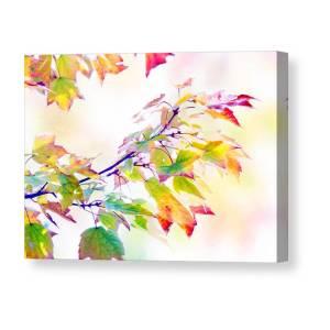 Tree Of Fall Canvas Print Canvas Art By Hal Halli