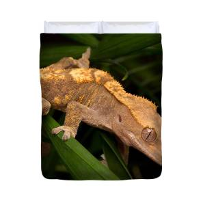 Crested Gecko Duvet Cover for Sale by Roger Hall