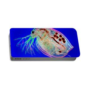 Water Flea Daphnia Magna Portable Battery Charger For Sale By Ted