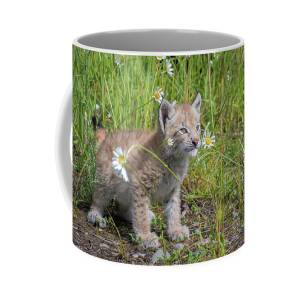 Siberian Lynx Kitten Coffee Mug for Sale by Evelyn Harrison