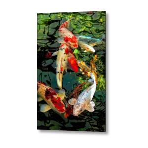 8ed134827679 Japanese Koi Fish Pond Metal Print by Jennie Marie Schell