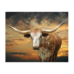 001 Multiple Sizes Available ** TEXAS LONGHORNS ** POSTER